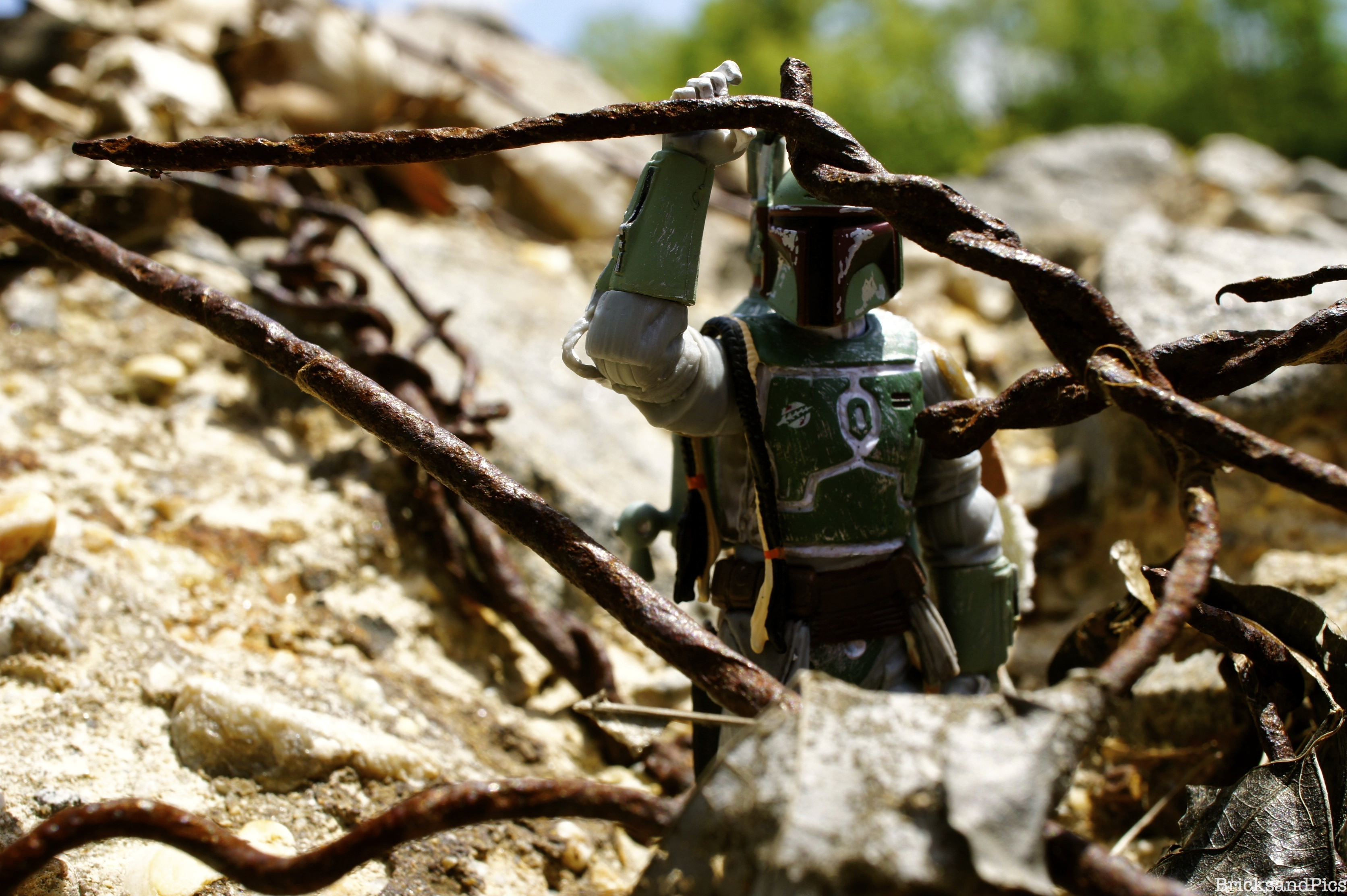 Boba out on the hunt….